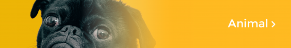Friendfunding_animal_EN